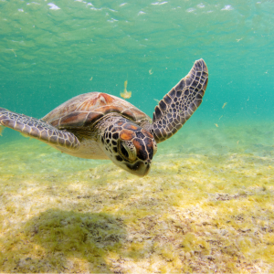 Name a Satellite-Tagged Sea Turtle