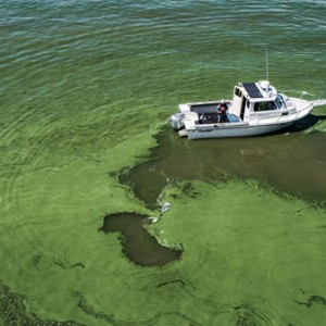 NOAA Awards $10.2 Million for Harmful Algal Bloom Research