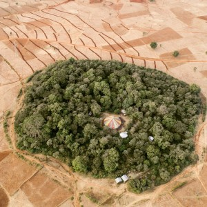 TREE Foundation's Forest Conservation in Ethiopia Featured in New York Times