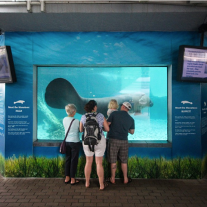 Manatee Memo for Mote Marine Aquarium Visitors