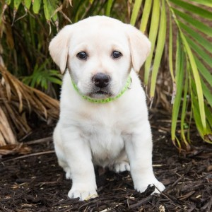 Southeastern Guide Dogs Ease Stress Of Isolation
