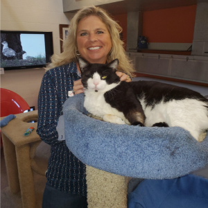 Cat Depot Finds Homes for Over 90 Cats This Past Month
