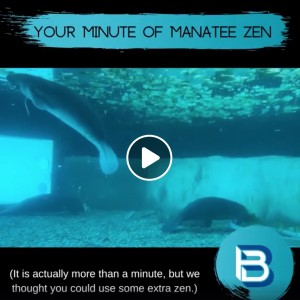 Minute of Manatee Zen