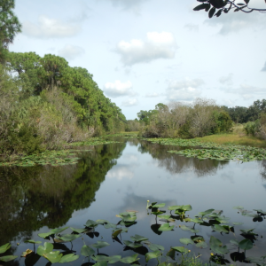 Conservation Foundation Permanently Protects Felts Audubon Preserve