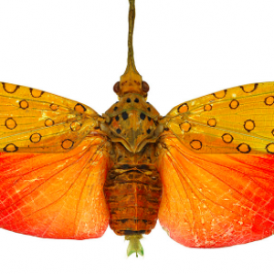 Small Wonders: Insects in Focus, Opens This Week at The Bishop Science Museum
