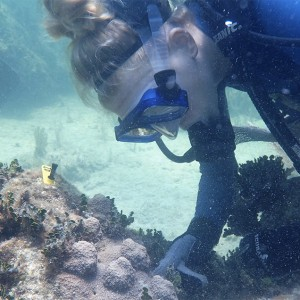 Mote Marine Laboratory Documents Massive Corals in Florida