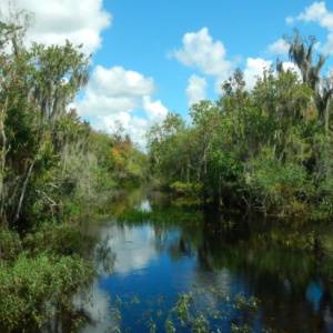 Conservation Foundation of the Gulf Coast announces Myakka Headwaters Protected