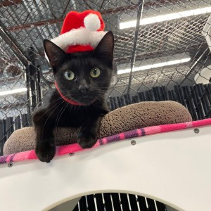 "Manatee County Animal Services ""Home for the Holidays�: Fee-Waived Adoptions"