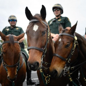 Apples and Carrots for the Newest Additions to Sarasota County's Sheriff's Office