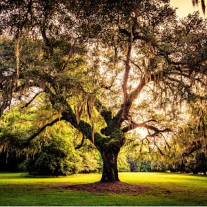 "Friends of Osprey Junction Trailhead Present Free ""TreeJuvenation Florida� Webinar"