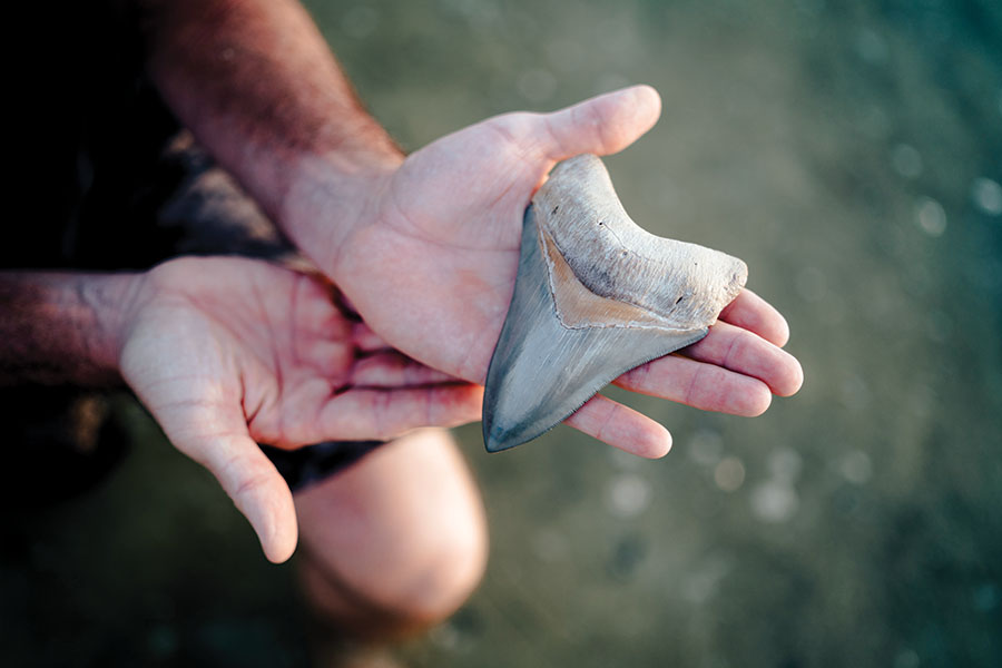 Frignoca cradles a five-inch megalodon tooth, discovered right off Venice Beach.